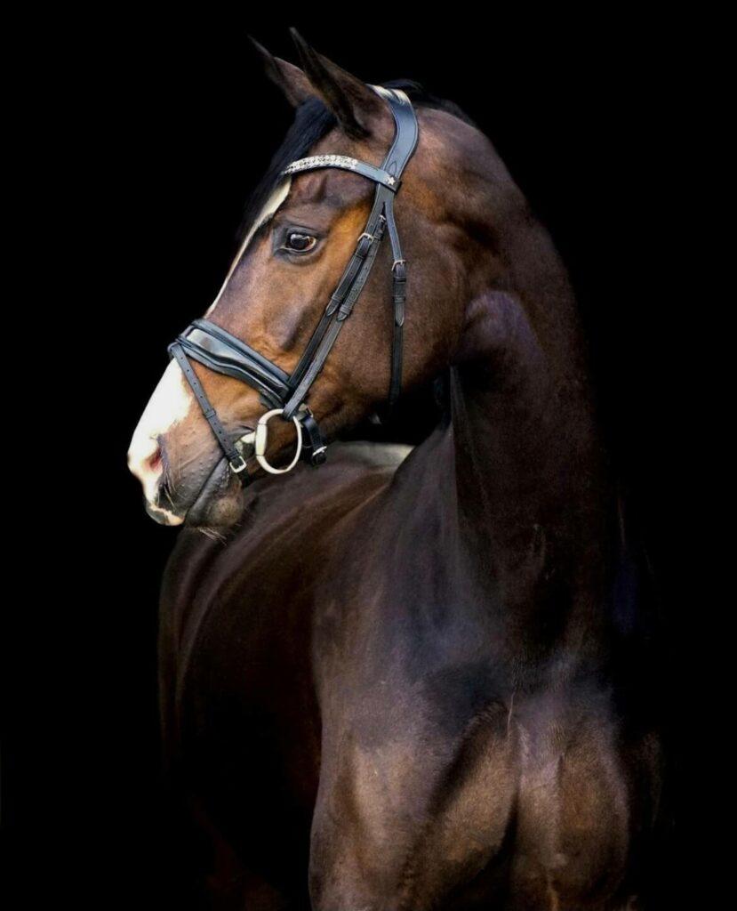 Krezip van Jeanine Nieuwenhuis met de frontriem Extra
