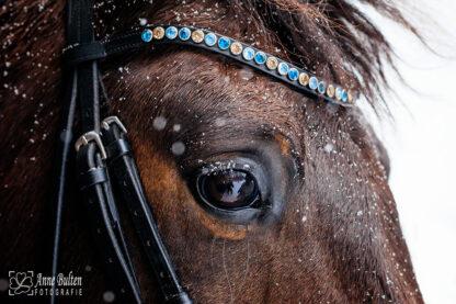 Paard van Susan Bulten met een eigen ontwerp van de frontriem Single Smal in de kleuren Turqoise, Ice en Sand